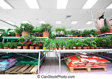 Shelves with variety of small pottery plants inside large supermarket