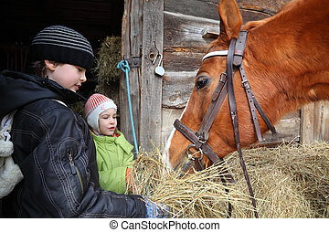 marrón, hermana, elasticidad, heno, foco, hermano, caballo,...