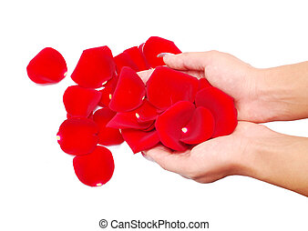 hand and rose petals isolated on white