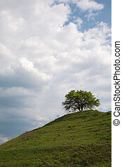 Tree on a hill - Lonely tree on a hill in a countryside