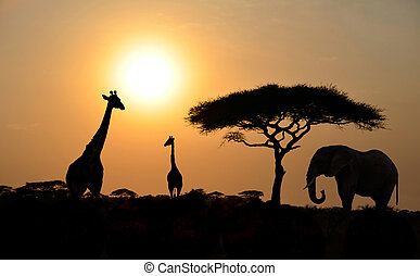 Giraffes and Elephant with Acacia tree with Sunset -...