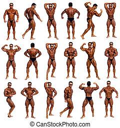 atractivo, macho, cuerpo, constructor, Se manifestar,...