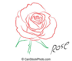 Sketch of rose vector