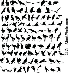 100 Birds - A hundred silhouettes of different birds