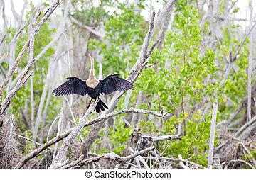 fauna of Everglades National Park, Florida, USA