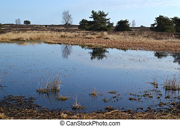 Small pool in a heather field.