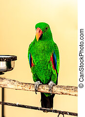 Green macaw parrot on perch