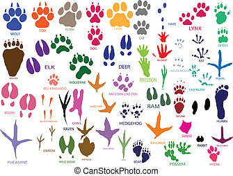 Paw prints - Vector paw prints of animals and birds