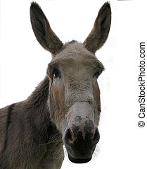 Donkey face - head of a donkey