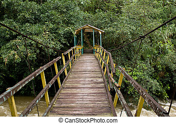 suspension bridge in rainforest - Pedestrian suspension...