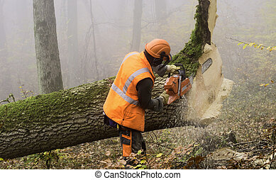 Lumberjack - lumberjack at work in a misty forest