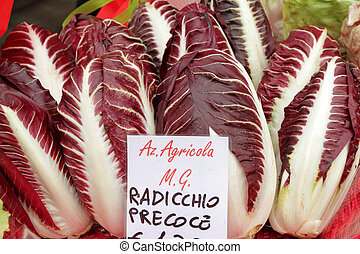 Radicchio Rosso di Treviso - variety precoce, type of...