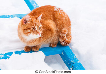 Red cat walking in the snow - little red kitten on white...