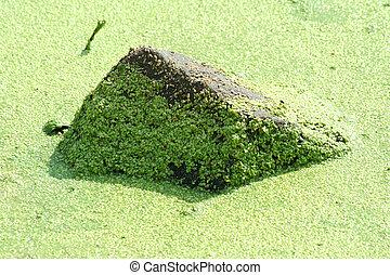Rock covered in algae - A Rock covered in green algae