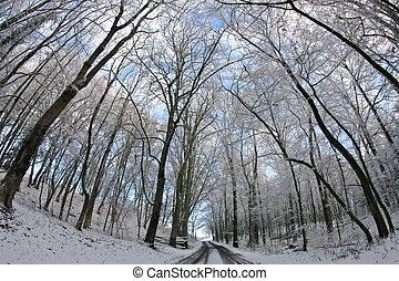 trees - a nice winter landscape on a december morning