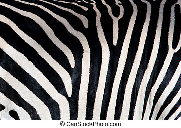 Zebra pattern - A high resolution image of wild zebras on...