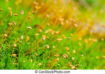 Moss - Macro photo of a green blooming moss with a shallow...