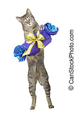 Cute cat carrying a decorative gift - Fun greeting card...