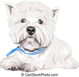 vector serious dog West Highland White Terrier breed sitting...