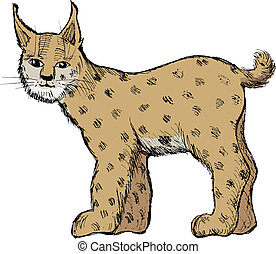 lynx on white - hand drawn, vector, sketch illustration of...