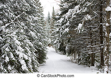 Winter landscape - Beautiful landscape of the boreal forest...