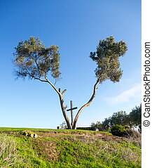Serra Cross in Ventura California between trees - Serra...