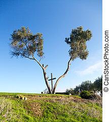 Serra Cross in Ventura California between trees - Serra...