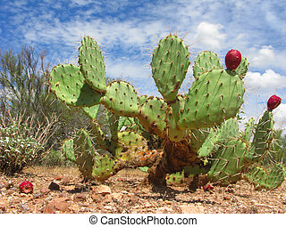 Arizonian Prickly Pear Cactus - Arizona Desert Cactus of...
