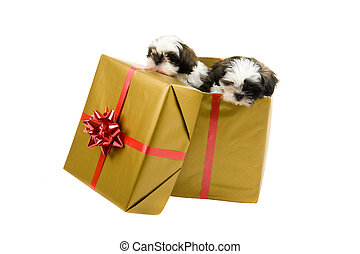 Puppies Pop Out of Christmas Present