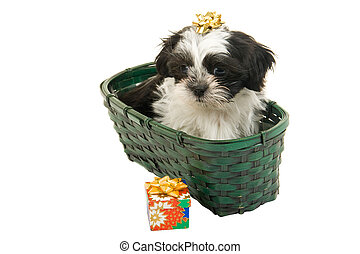 Christmas Puppy In A Basket - Cute Shih Tzu puppy in a green...