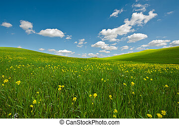 Meadows of Tuscany - Farmhouse and Green Sloping Meadows of...