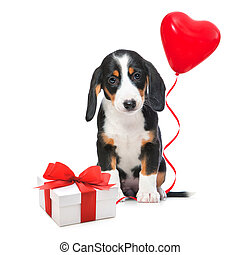Party dog with gift boxes and balloons. Isolated on white...