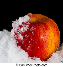 Red Apple in the snow - Red apple in the snow on a black...