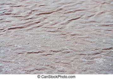 Salt film on water surface on Sambhar Salt Lake, India....