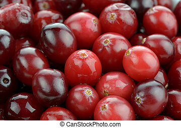 Cranberries - Close-up of fresh cranberries