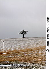 alone - winter landscape with a lonely tree