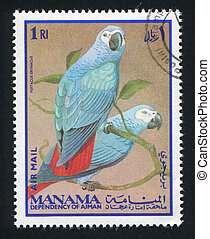 African Grey Parro - MANAMA - CIRCA 1976: stamp printed by...