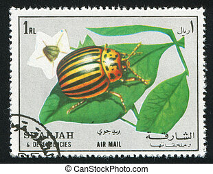 Colorado beetle - SHARJAH AND DEPENDENCIES - CIRCA 1972:...