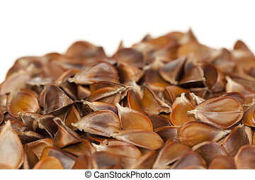 beech - spilled seed with beech  fruit on white background