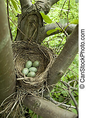 bird nest - birds nest with eggs on tree