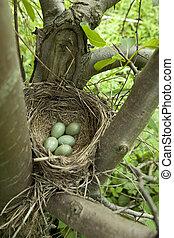 bird nest - bird's nest with eggs on tree