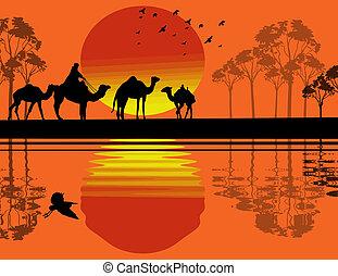 Bedouin camel caravan in wild africa landscape near water on...