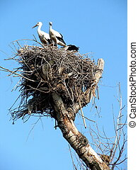 storks couple in nest on blue sky background 13