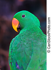 Nice parrot with a lot of green colours in zoo