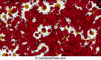 falling rose petals & daisy,wedding
