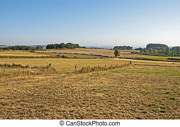 Agricultural field in Summer