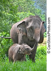 asia elephant mother and baby in forest of southeast asia