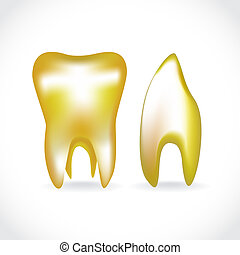 isolated golden human teeth - illustration