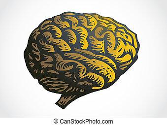 human brain - isolated illustration