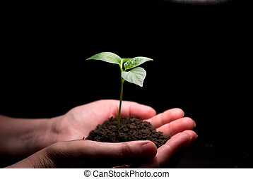 hands holdings plant - Hands holdings a little green plant...